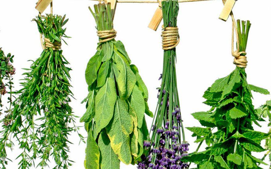 Herboristerías